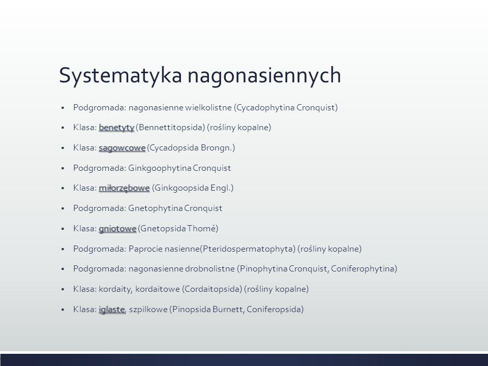 Systematyka nagonasiennych  Podgromada: nagonasienne wielkolistne (Cycadophytina Cronquist) benetyty  Klasa: benetyty (Bennettitopsida) (rośliny kop