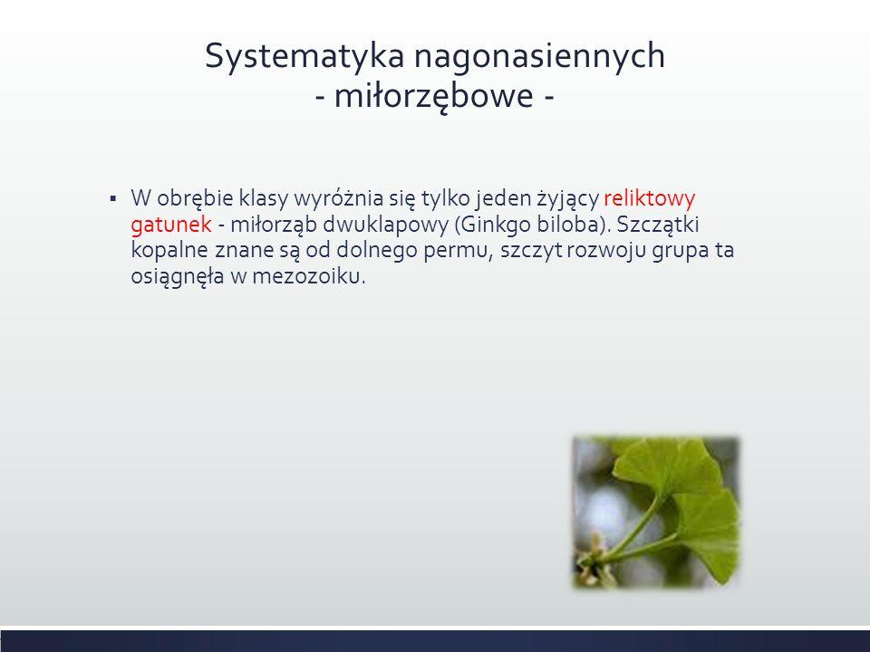 Systematyka nagonasiennych - miłorzębowe -  W obrębie klasy wyróżnia się tylko jeden żyjący reliktowy gatunek - miłorząb dwuklapowy (Ginkgo biloba).