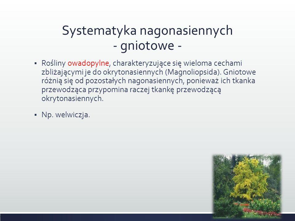 Systematyka nagonasiennych - gniotowe -  Rośliny owadopylne, charakteryzujące się wieloma cechami zbliżającymi je do okrytonasiennych (Magnoliopsida)