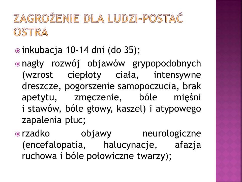  inkubacja 10-14 dni (do 35);  nagły rozwój objawów grypopodobnych (wzrost ciepłoty ciała, intensywne dreszcze, pogorszenie samopoczucia, brak apetytu, zmęczenie, bóle mięśni i stawów, bóle głowy, kaszel) i atypowego zapalenia płuc;  rzadko objawy neurologiczne (encefalopatia, halucynacje, afazja ruchowa i bóle połowiczne twarzy);