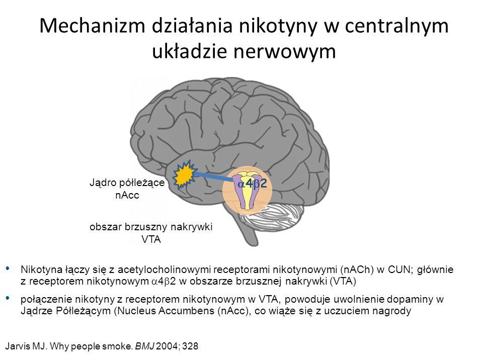 Nikotyna łączy się z acetylocholinowymi receptorami nikotynowymi (nACh) w CUN; głównie z receptorem nikotynowym  4  2 w obszarze brzusznej nakrywki (VTA) połączenie nikotyny z receptorem nikotynowym w VTA, powoduje uwolnienie dopaminy w Jądrze Półleżącym (Nucleus Accumbens (nAcc), co wiąże się z uczuciem nagrody Mechanizm działania nikotyny w centralnym układzie nerwowym obszar brzuszny nakrywki VTA Jądro półleżące nAcc Jarvis MJ.
