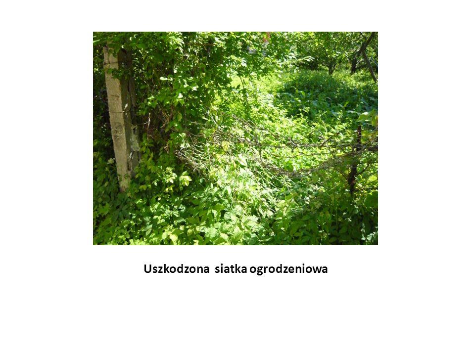 Uszkodzona siatka ogrodzeniowa