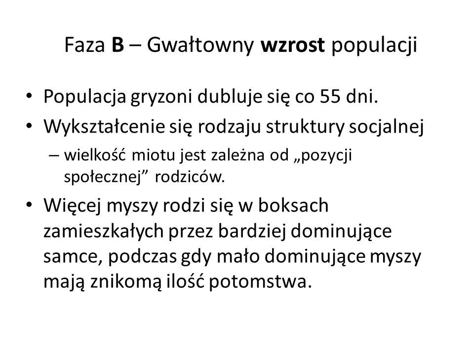 Faza B – Gwałtowny wzrost populacji Populacja gryzoni dubluje się co 55 dni.