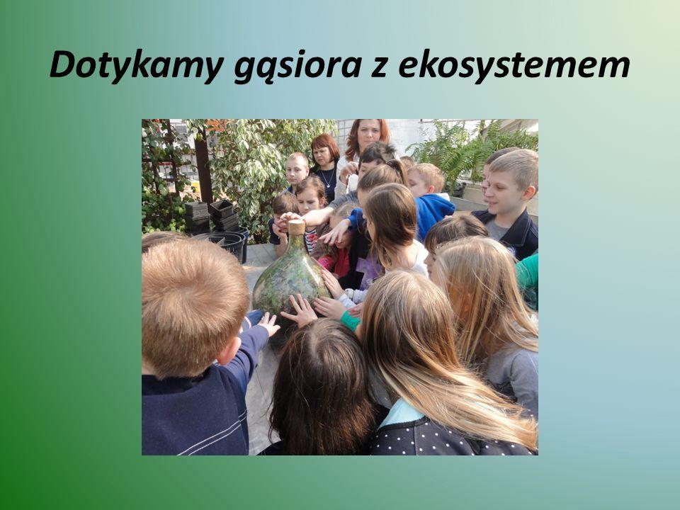 Dotykamy gąsiora z ekosystemem