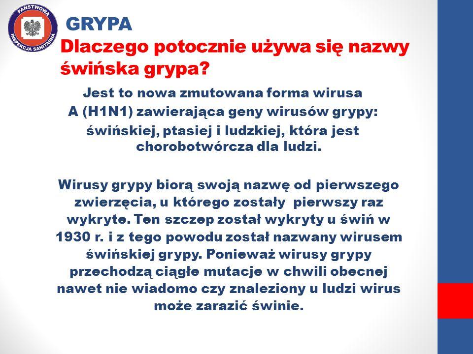 GRYPA Dlaczego potocznie używa się nazwy świńska grypa? Jest to nowa zmutowana forma wirusa A (H1N1) zawierająca geny wirusów grypy: świńskiej, ptasie