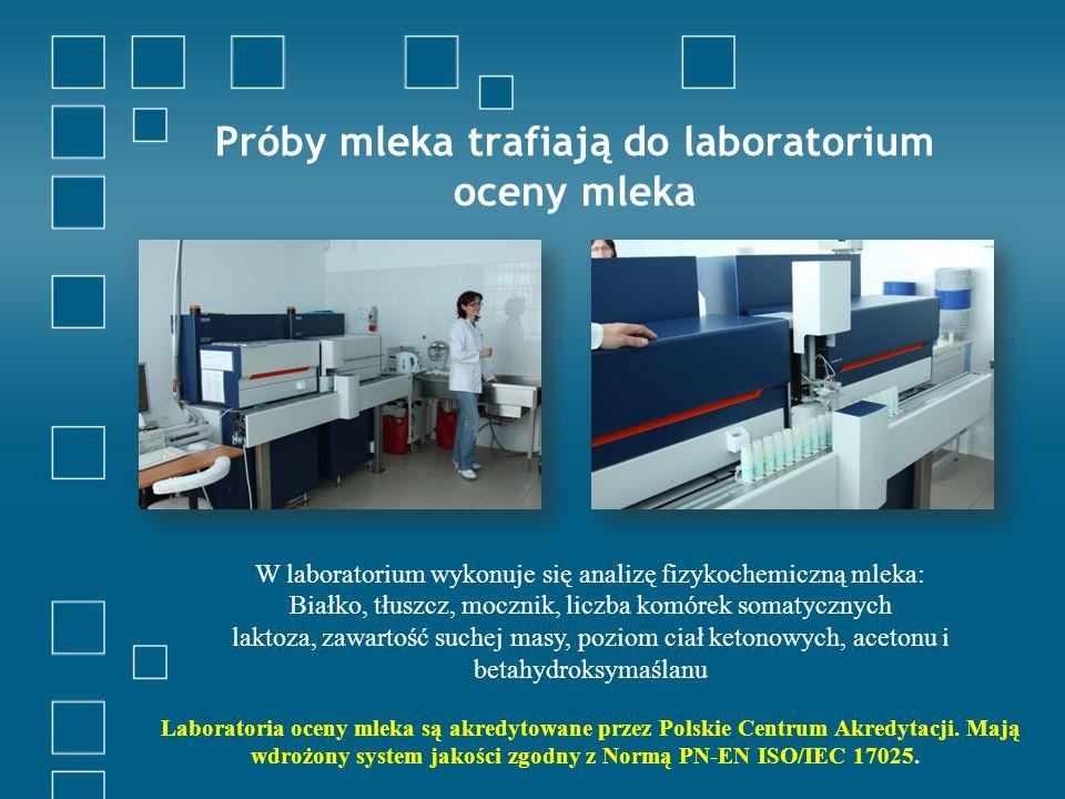 Próby mleka trafiają do laboratorium oceny mleka W laboratorium wykonuje się analizę fizykochemiczną mleka: Białko, tłuszcz, mocznik, liczba komórek somatycznych laktoza, zawartość suchej masy, poziom ciał ketonowych, acetonu i betahydroksymaślanu Laboratoria oceny mleka są akredytowane przez Polskie Centrum Akredytacji.