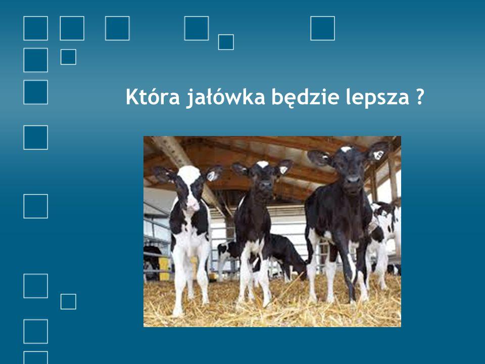 Która krowa jest lepsza ?