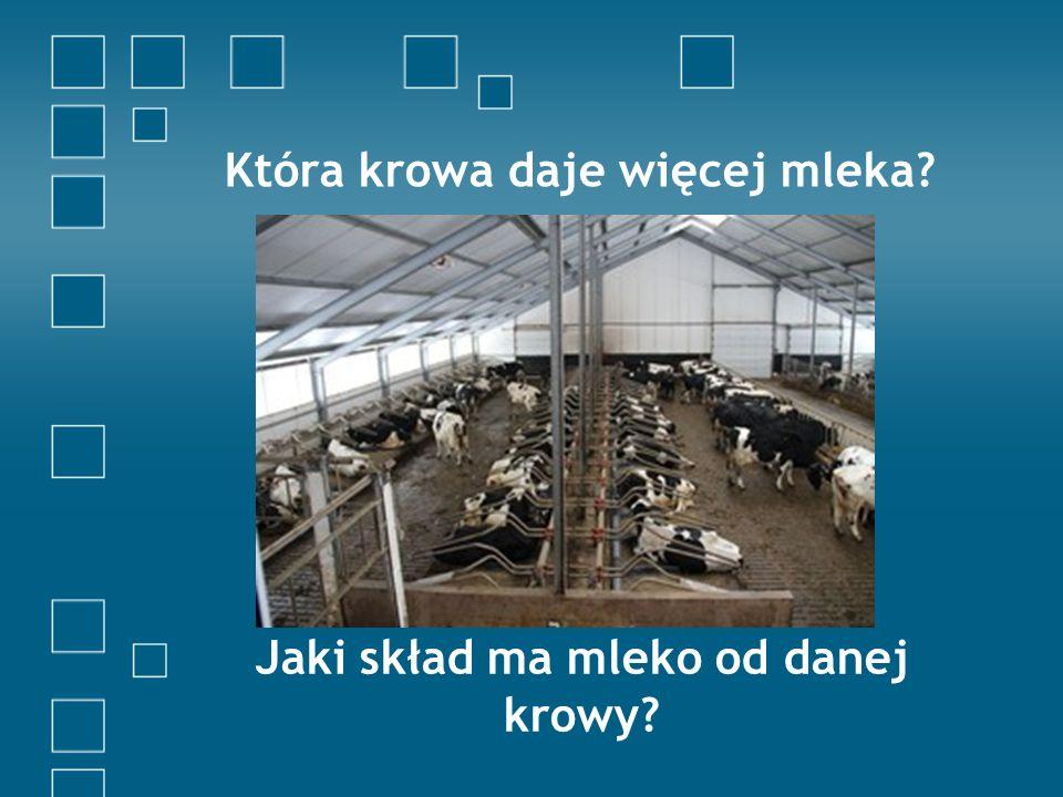 Która krowa daje więcej mleka? Jaki skład ma mleko od danej krowy?