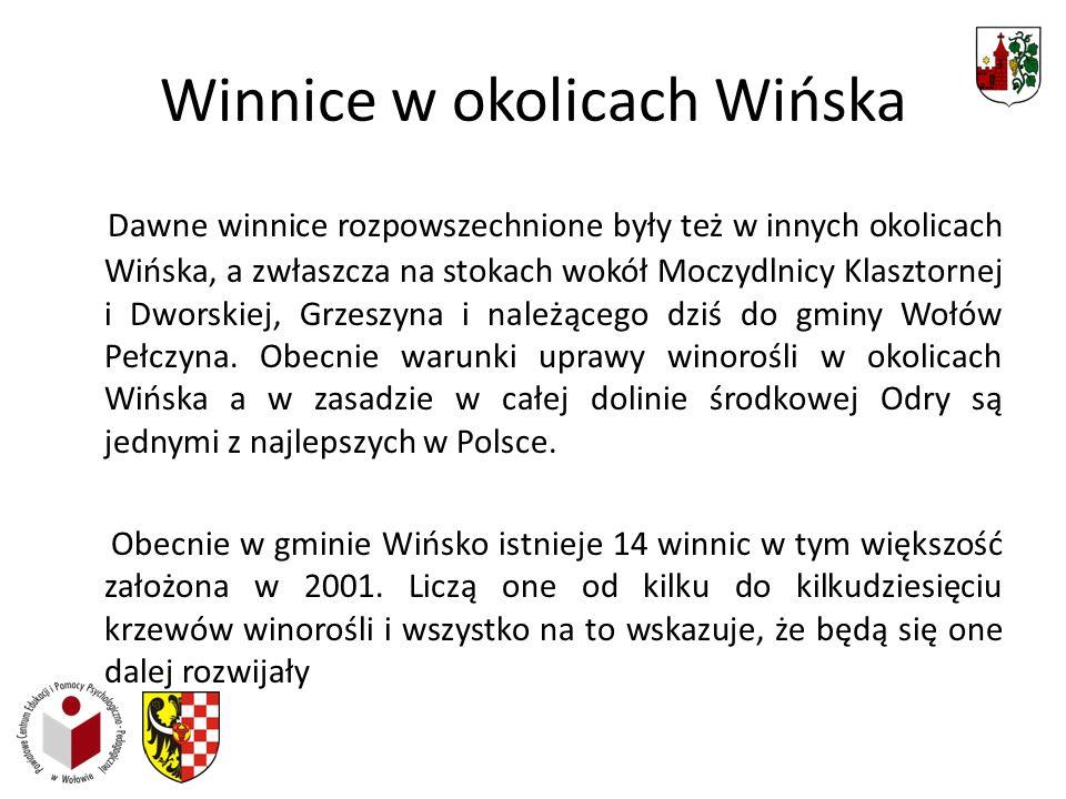 Winnice w okolicach Wińska Dawne winnice rozpowszechnione były też w innych okolicach Wińska, a zwłaszcza na stokach wokół Moczydlnicy Klasztornej i Dworskiej, Grzeszyna i należącego dziś do gminy Wołów Pełczyna.