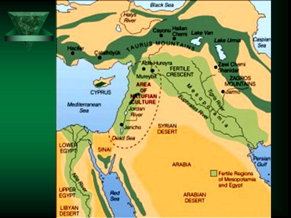 ST BH  Księgi Historyczne –pięcioksiąg –historia deuteronomisty –historia kronikarza  Księgi Dydaktyczne –Psałterz –Księgi Mądrościowe –Księgi Prorockie  Księgi Prorockie –prorocy więksi (Iz, Jr, Ez, Dn) –prorocy mniejsi Zawartość ST –Biblii Hebrajska –Księgi Deuterokanoniczne  Tora (5 Ksiąg, Rdz-Pwt)  Prorocy (8 Ksiąg) –Prorocy Pierwsi Jozuego Sędziów 1-2 Samuela 1-2 Królewska –Prorocy Ostatni Izajasz Jeremiasz Ezechiel 12-tu Proroków Mniejszych  Pisma (11 Ksiąg) Psałterz, Przysłów, Hioba 5 Megilot Daniel, Ezd-Neh, 1-2 Krn
