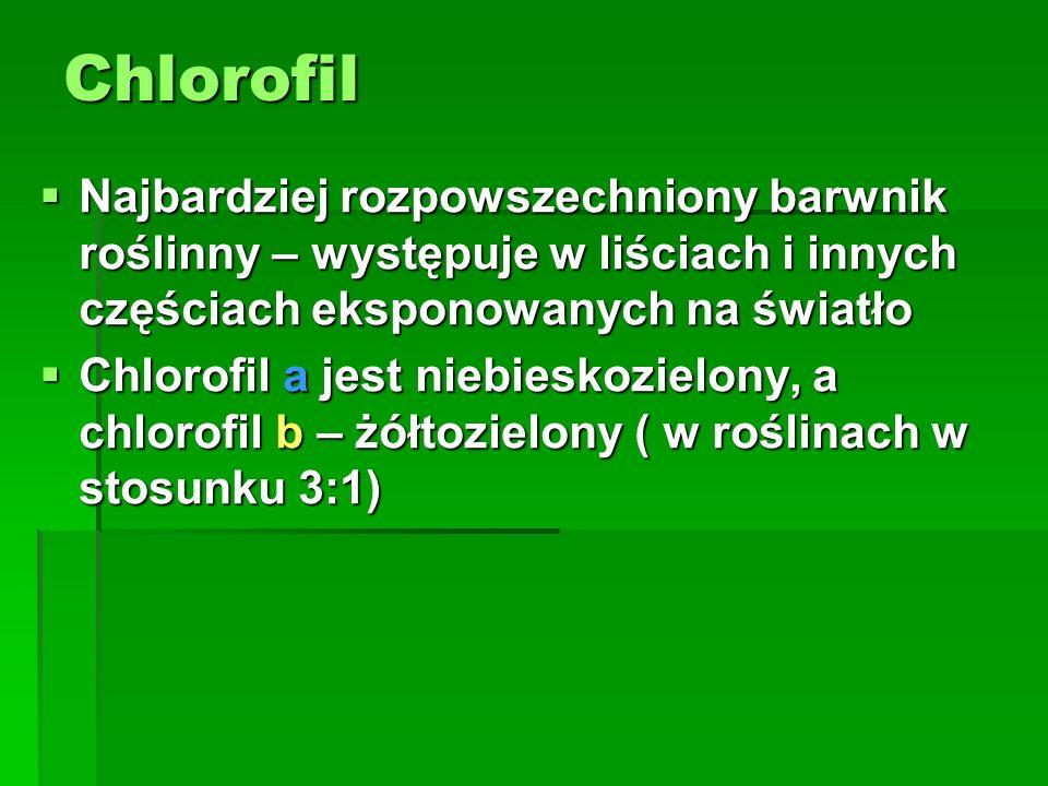 Chlorofil  Najbardziej rozpowszechniony barwnik roślinny – występuje w liściach i innych częściach eksponowanych na światło  Chlorofil a jest niebie