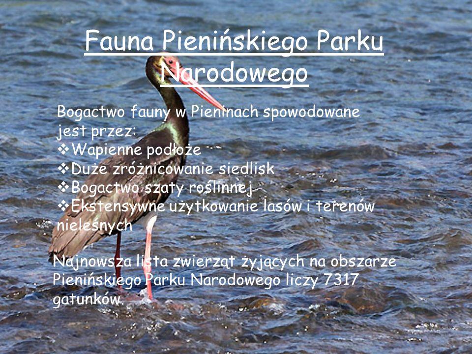 Z większych ssaków występują: borsukkuna leśnadzik żbikryś sarna