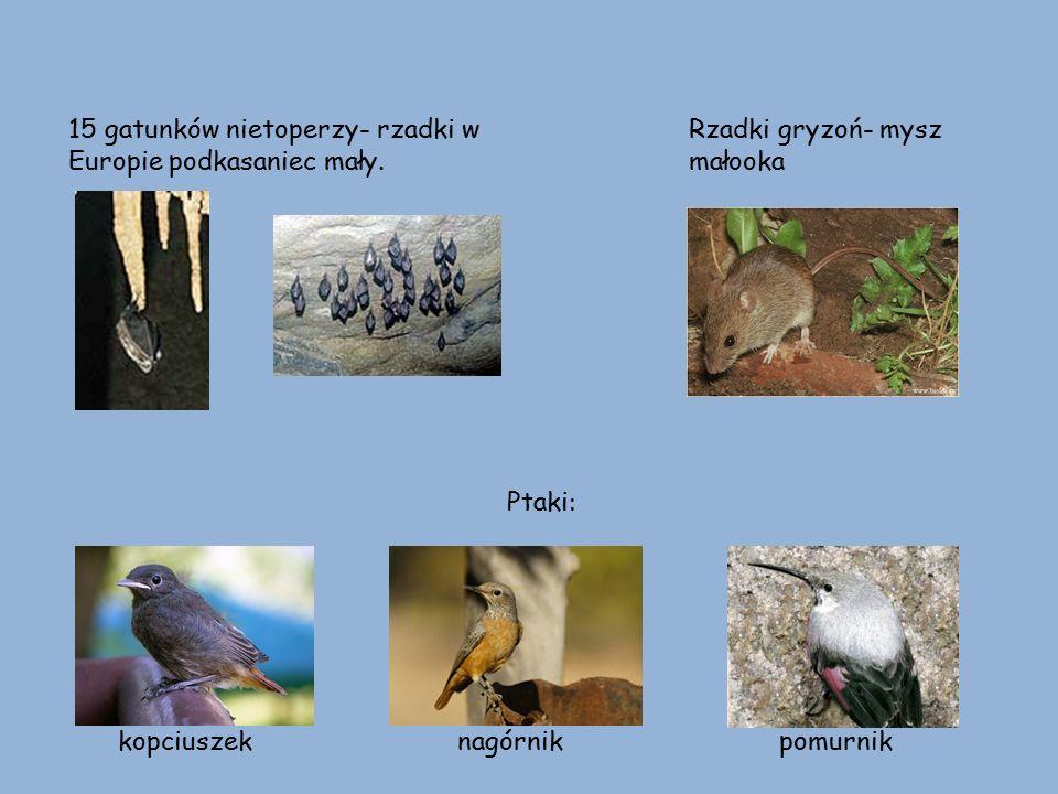 Ważki-rzadki okaz: straszka północna Motyle-stanowią ok.