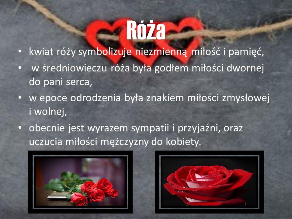 Róża kwiat róży symbolizuje niezmienną miłość i pamięć, w średniowieczu róża była godłem miłości dwornej do pani serca, w epoce odrodzenia była znakie