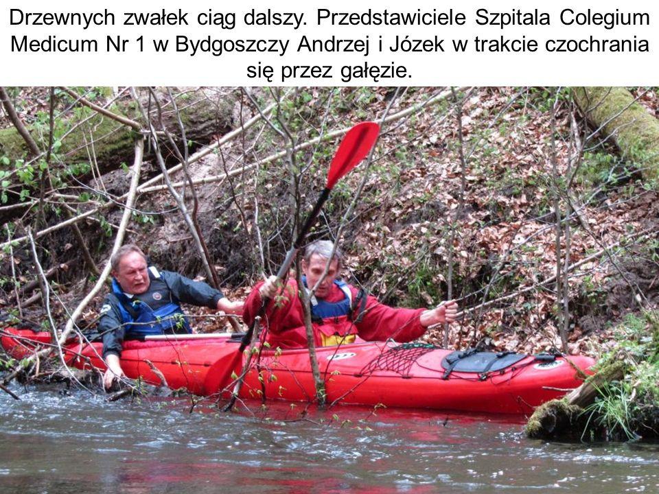 Drzewnych zwałek ciąg dalszy. Przedstawiciele Szpitala Colegium Medicum Nr 1 w Bydgoszczy Andrzej i Józek w trakcie czochrania się przez gałęzie.