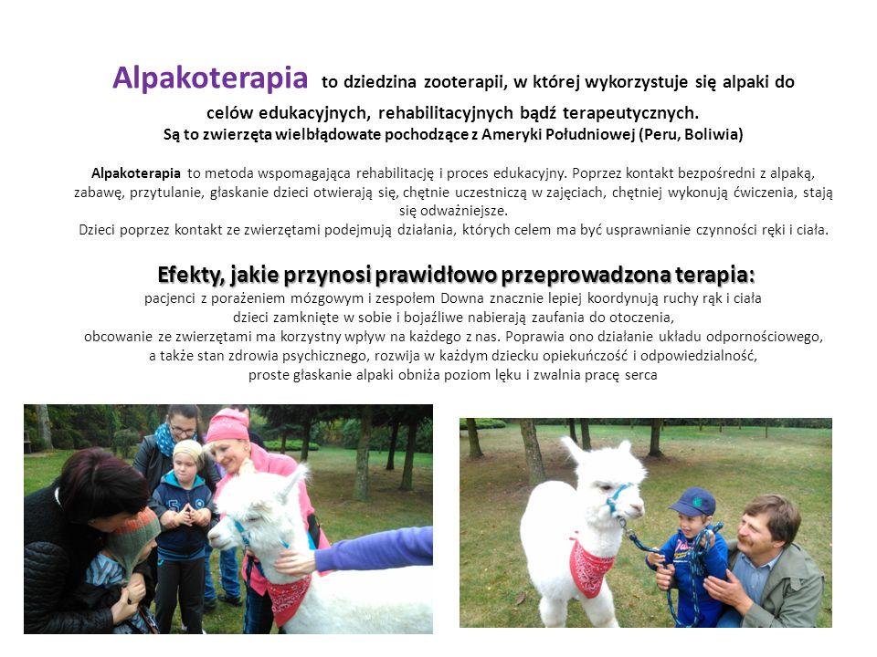 Efekty, jakie przynosi prawidłowo przeprowadzona terapia: Alpakoterapia to dziedzina zooterapii, w której wykorzystuje się alpaki do celów edukacyjnych, rehabilitacyjnych bądź terapeutycznych.