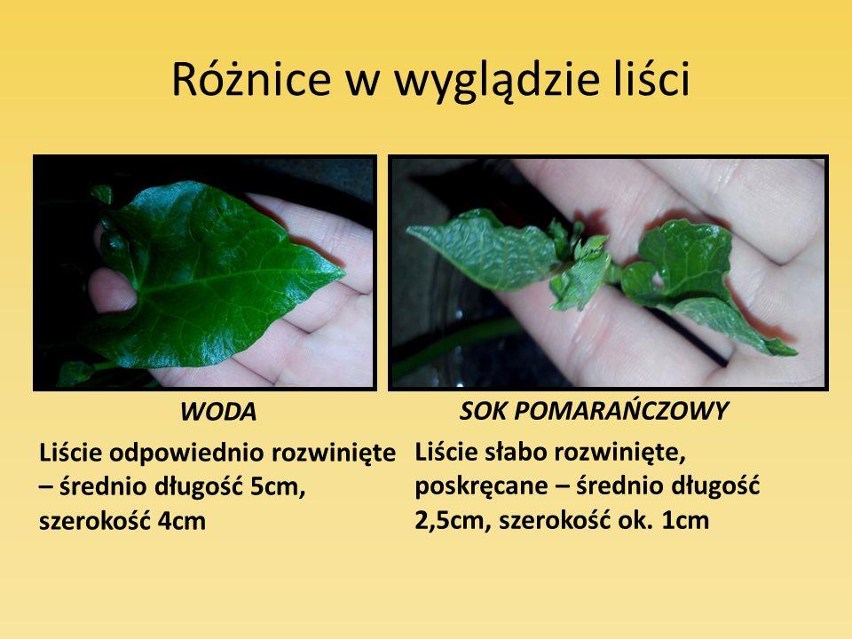 Różnice w wyglądzie liści WODA Liście odpowiednio rozwinięte – średnio długość 5cm, szerokość 4cm SOK POMARAŃCZOWY Liście słabo rozwinięte, poskręcane