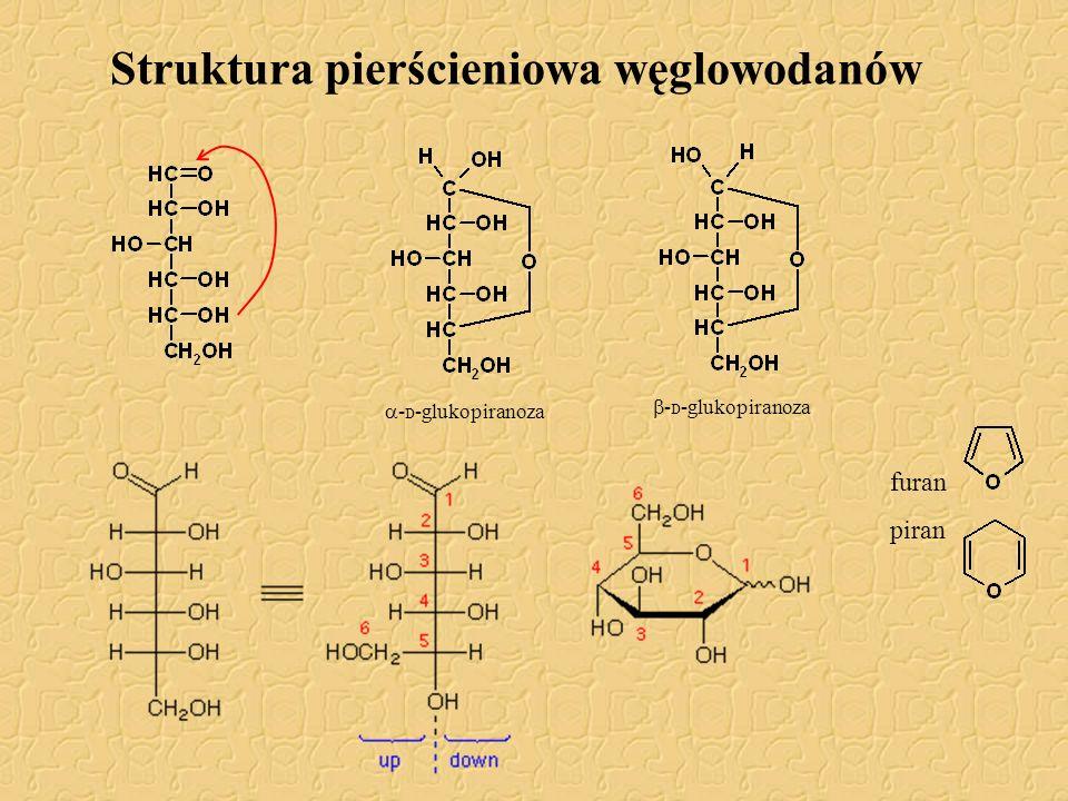 Struktura pierścieniowa węglowodanów furan piran  - D -glukopiranoza  - D -glukopiranoza