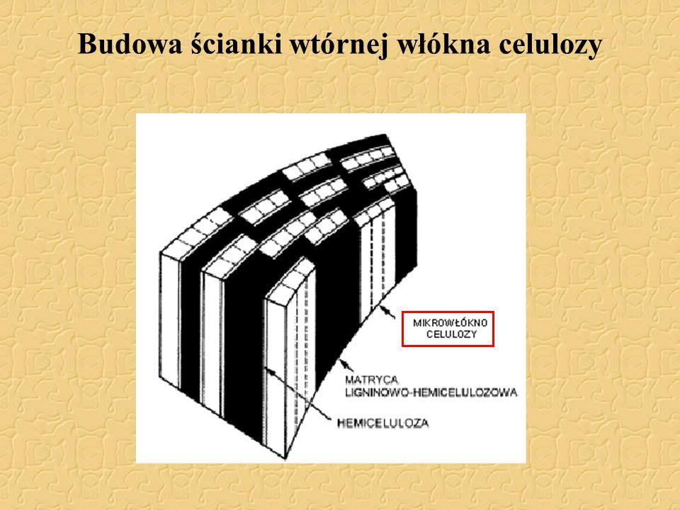 Budowa ścianki wtórnej włókna celulozy