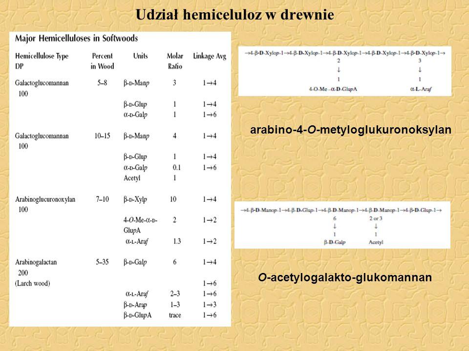 Udział hemiceluloz w drewnie arabino-4-O-metyloglukuronoksylan O-acetylogalakto-glukomannan