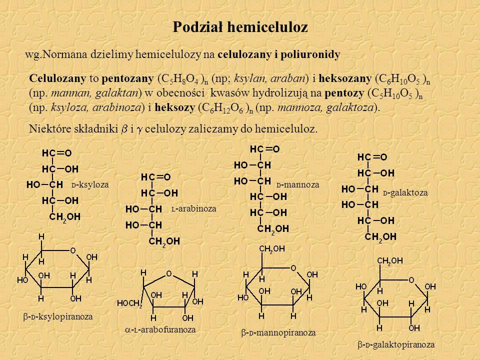Podział hemiceluloz wg.Normana dzielimy hemicelulozy na celulozany i poliuronidy Celulozany to pentozany (C 5 H 8 O 4 ) n (np; ksylan, araban) i hekso