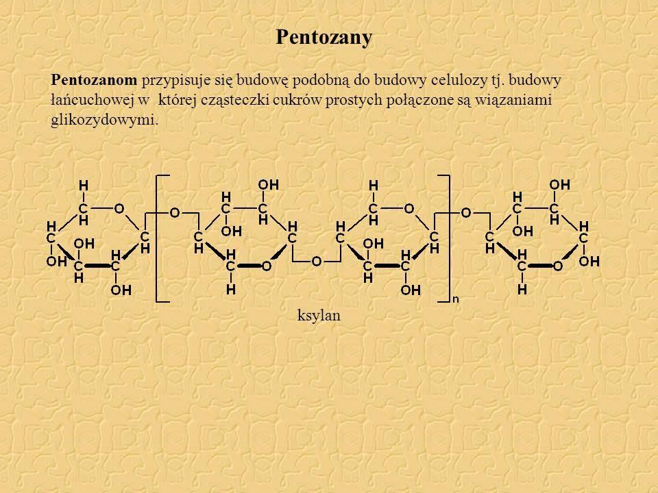 Pentozany Pentozanom przypisuje się budowę podobną do budowy celulozy tj. budowy łańcuchowej w której cząsteczki cukrów prostych połączone są wiązania