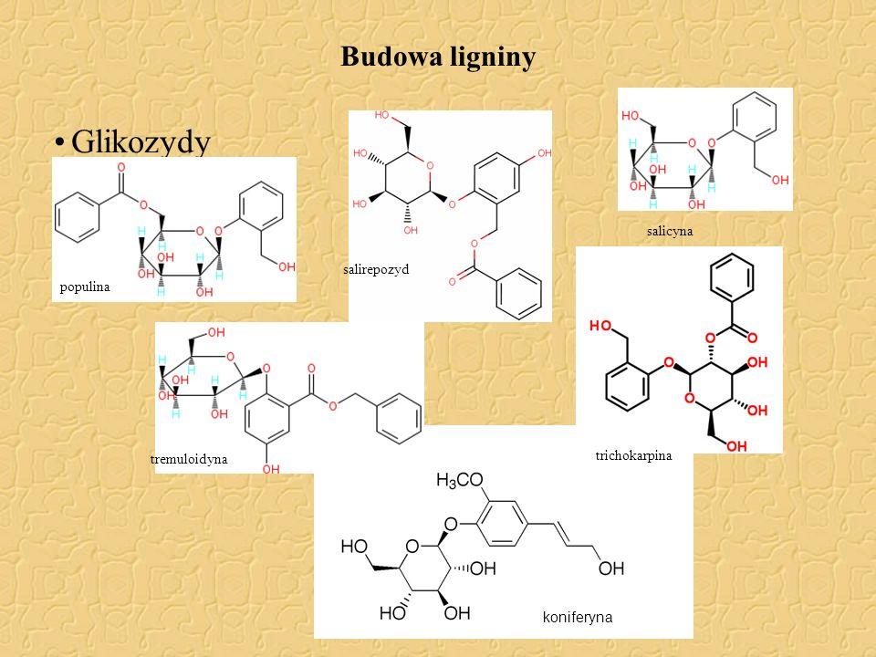 Budowa ligniny Glikozydy populina tremuloidyna salicyna salirepozyd trichokarpina koniferyna