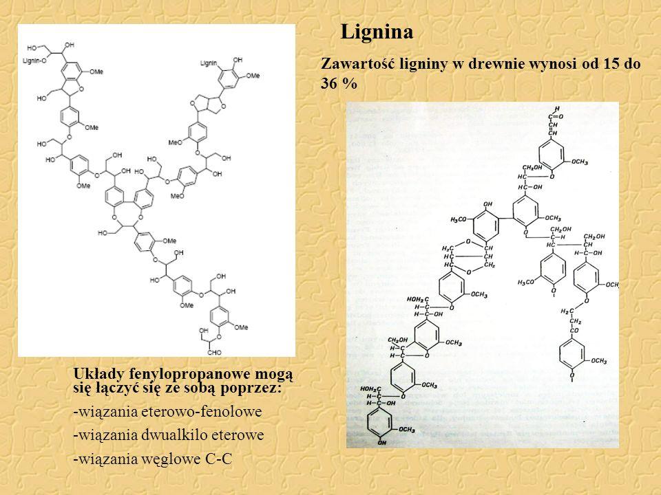 Lignina Układy fenylopropanowe mogą się łączyć się ze sobą poprzez: -wiązania eterowo-fenolowe -wiązania dwualkilo eterowe -wiązania węglowe C-C Zawar