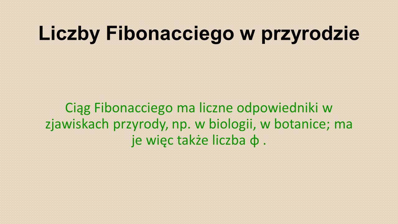 Liczby Fibonacciego w przyrodzie Ciąg Fibonacciego ma liczne odpowiedniki w zjawiskach przyrody, np. w biologii, w botanice; ma je więc także liczba φ