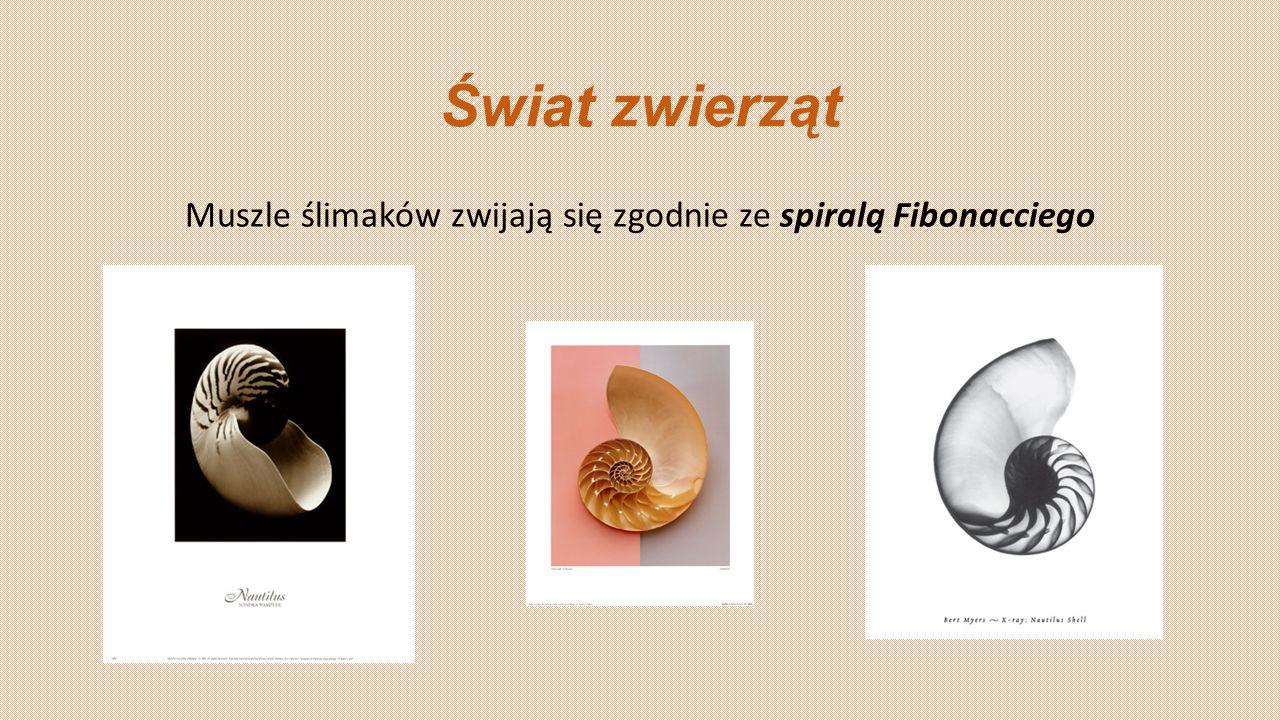 Świat zwierząt Muszle ślimaków zwijają się zgodnie ze spiralą Fibonacciego