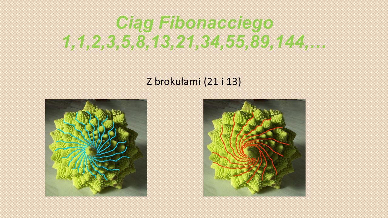 Ciąg Fibonacciego 1,1,2,3,5,8,13,21,34,55,89,144,… Z brokułami (21 i 13)