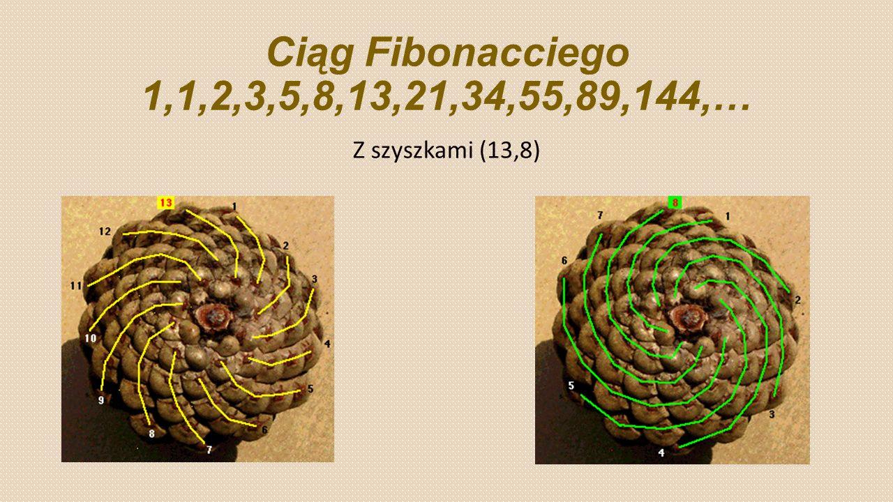 Ciąg Fibonacciego 1,1,2,3,5,8,13,21,34,55,89,144,… Z szyszkami (13,8)
