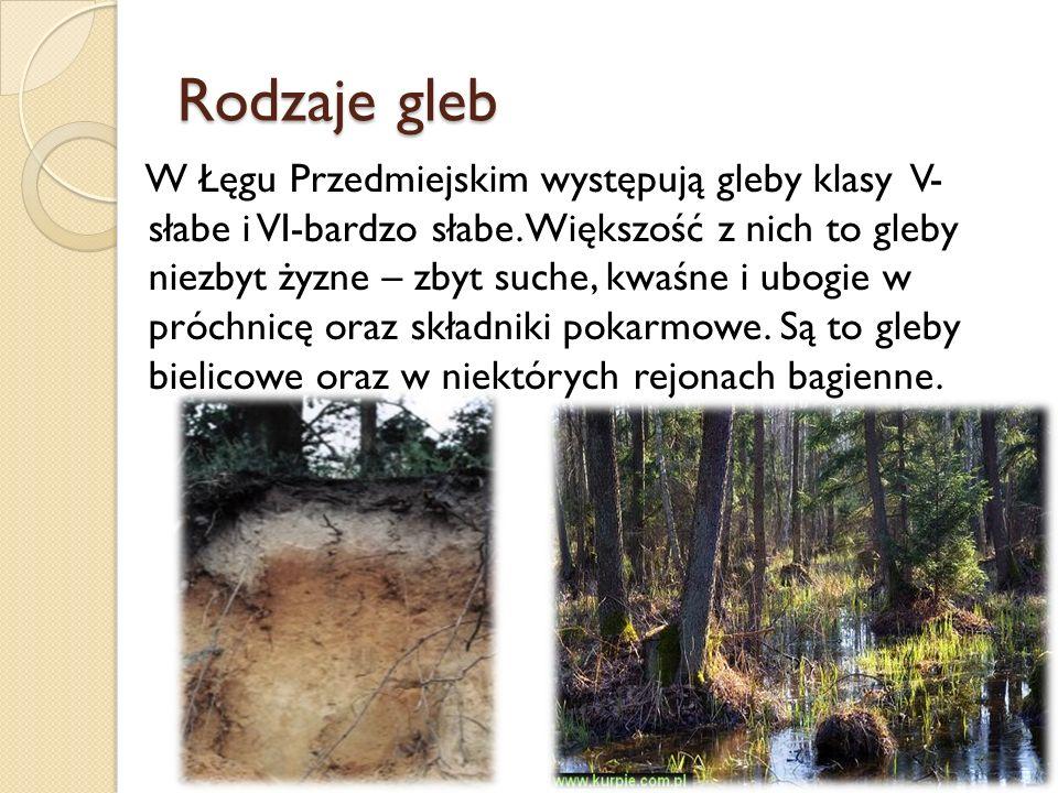 Rodzaje gleb W Łęgu Przedmiejskim występują gleby klasy V- słabe i VI-bardzo słabe. Większość z nich to gleby niezbyt żyzne – zbyt suche, kwaśne i ubo