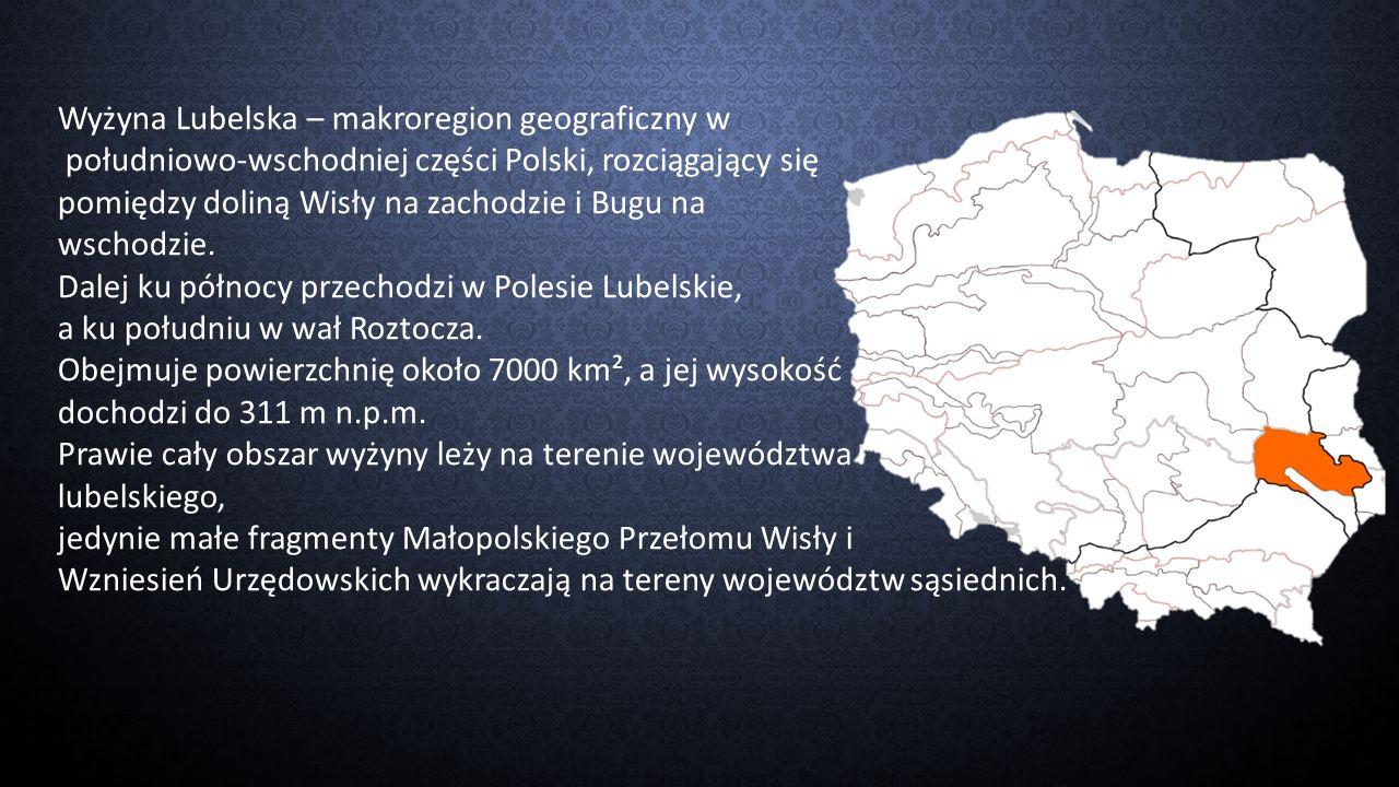 Wyżyna Lubelska – makroregion geograficzny w południowo-wschodniej części Polski, rozciągający się pomiędzy doliną Wisły na zachodzie i Bugu na wschod