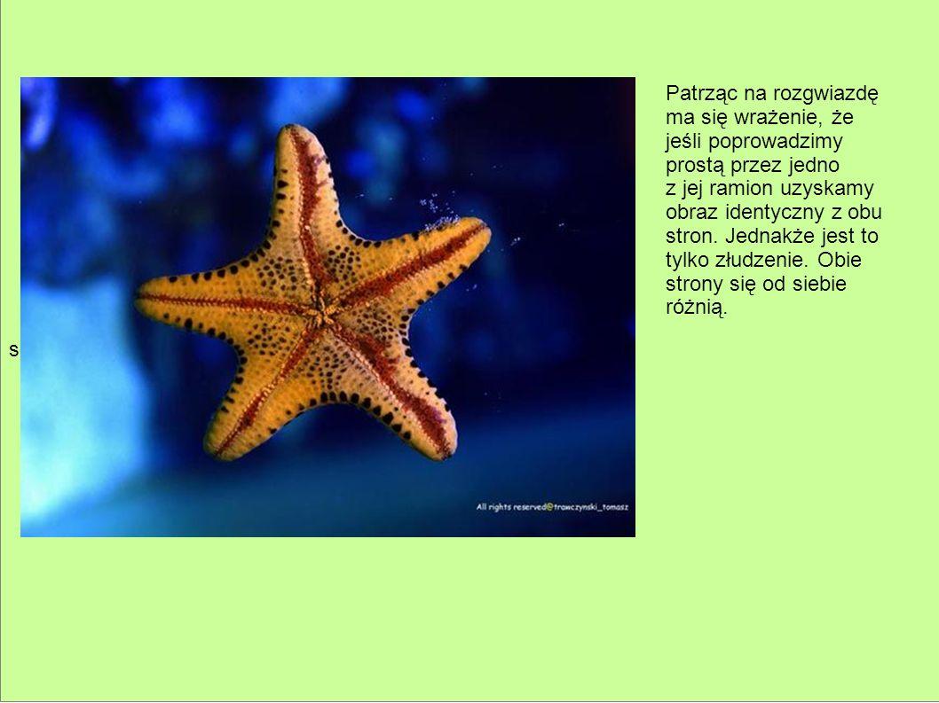 sd Patrząc na rozgwiazdę ma się wrażenie, że jeśli poprowadzimy prostą przez jedno z jej ramion uzyskamy obraz identyczny z obu stron. Jednakże jest t