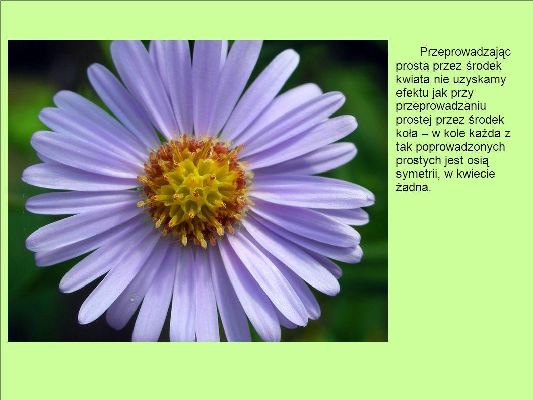 Przeprowadzając prostą przez środek kwiata nie uzyskamy efektu jak przy przeprowadzaniu prostej przez środek koła – w kole każda z tak poprowadzonych