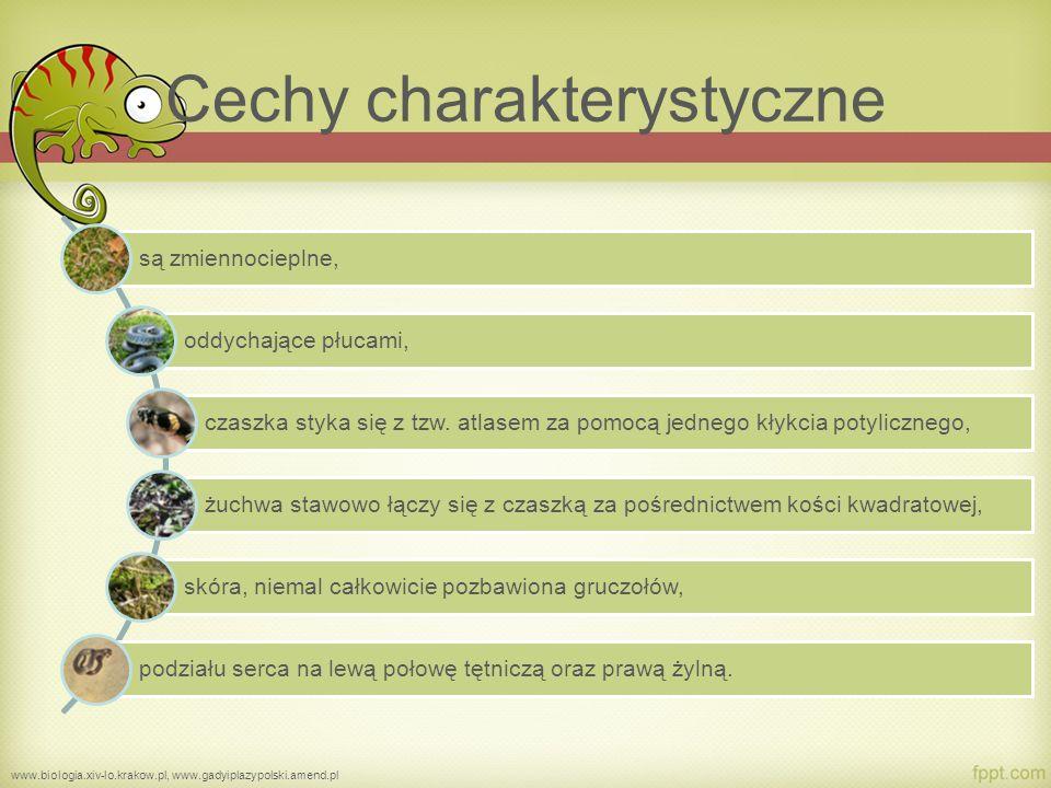 Budowa zewnętrzna i wewnętrzna gadów www.sciaga.pl