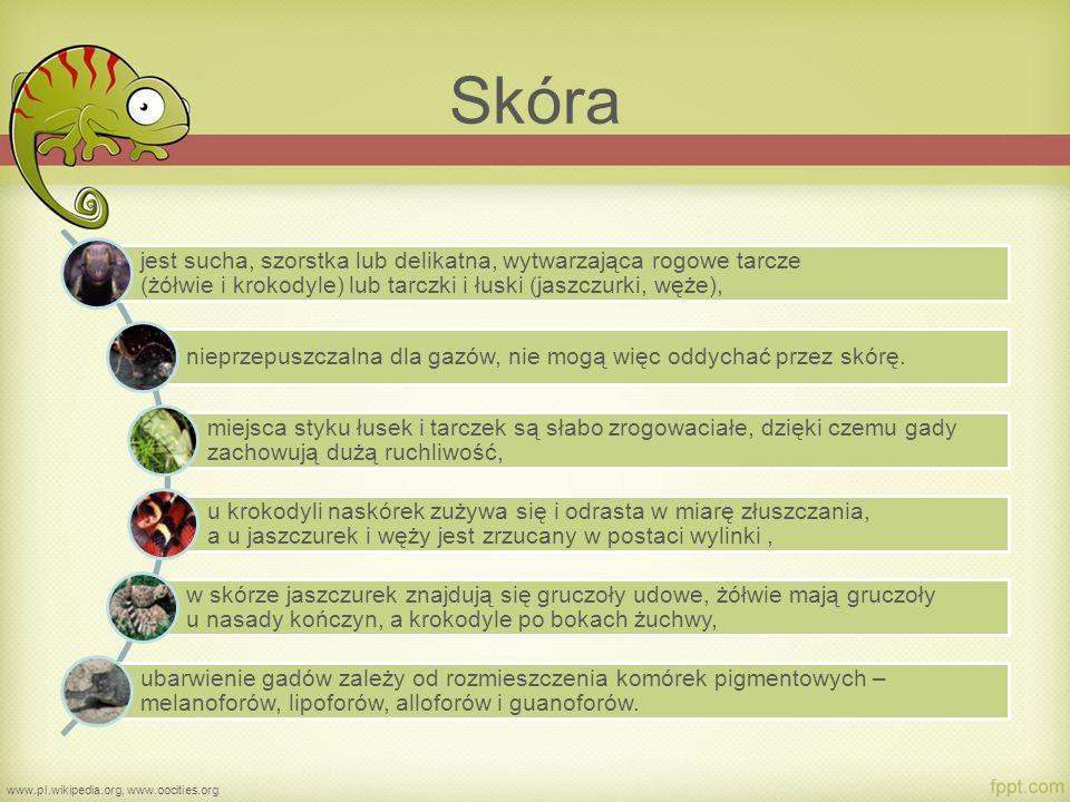 Układ szkieletowy www.forum.linum.pl