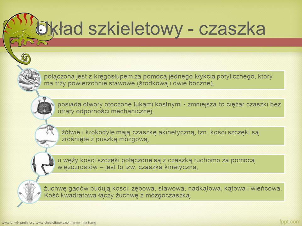 Typy czaszek u gadów www.commons.wikimedia.org