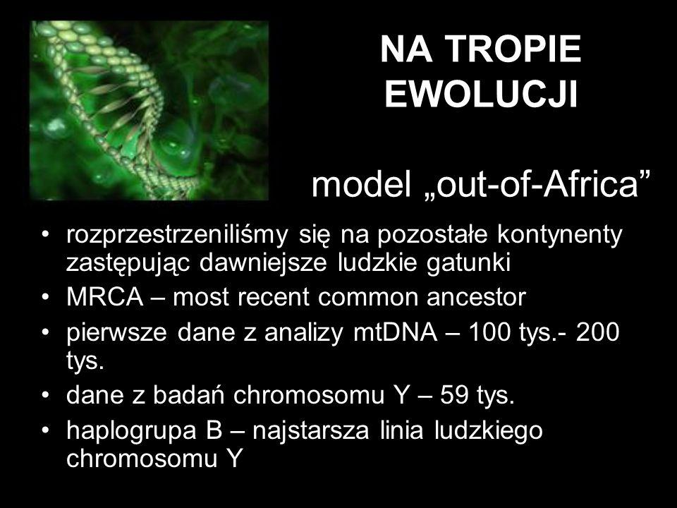 """NA TROPIE EWOLUCJI model """"out-of-Africa"""" rozprzestrzeniliśmy się na pozostałe kontynenty zastępując dawniejsze ludzkie gatunki MRCA – most recent comm"""