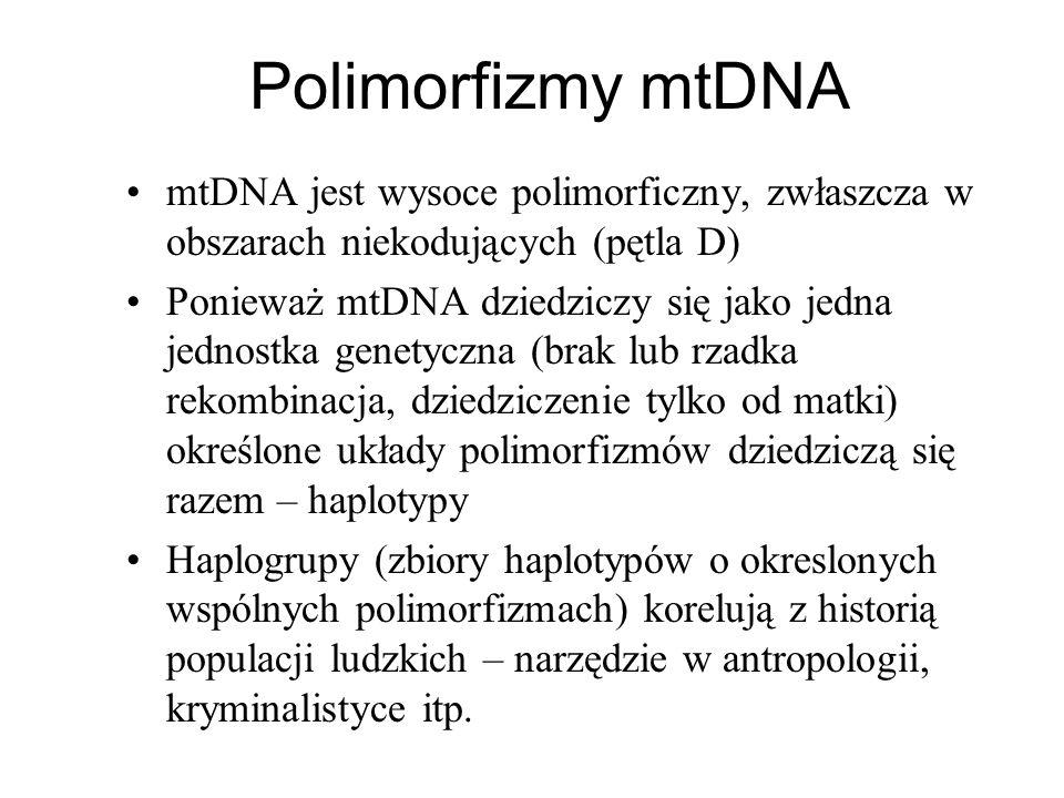 Polimorfizmy mtDNA mtDNA jest wysoce polimorficzny, zwłaszcza w obszarach niekodujących (pętla D) Ponieważ mtDNA dziedziczy się jako jedna jednostka g