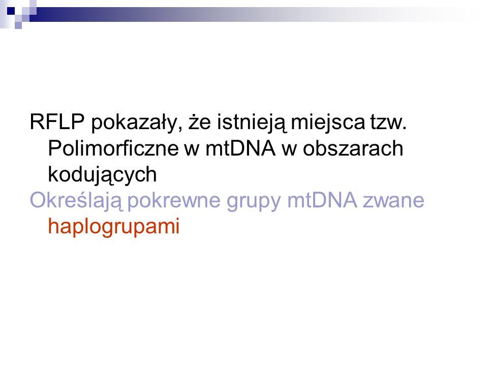 RFLP pokazały, że istnieją miejsca tzw. Polimorficzne w mtDNA w obszarach kodujących Określają pokrewne grupy mtDNA zwane haplogrupami