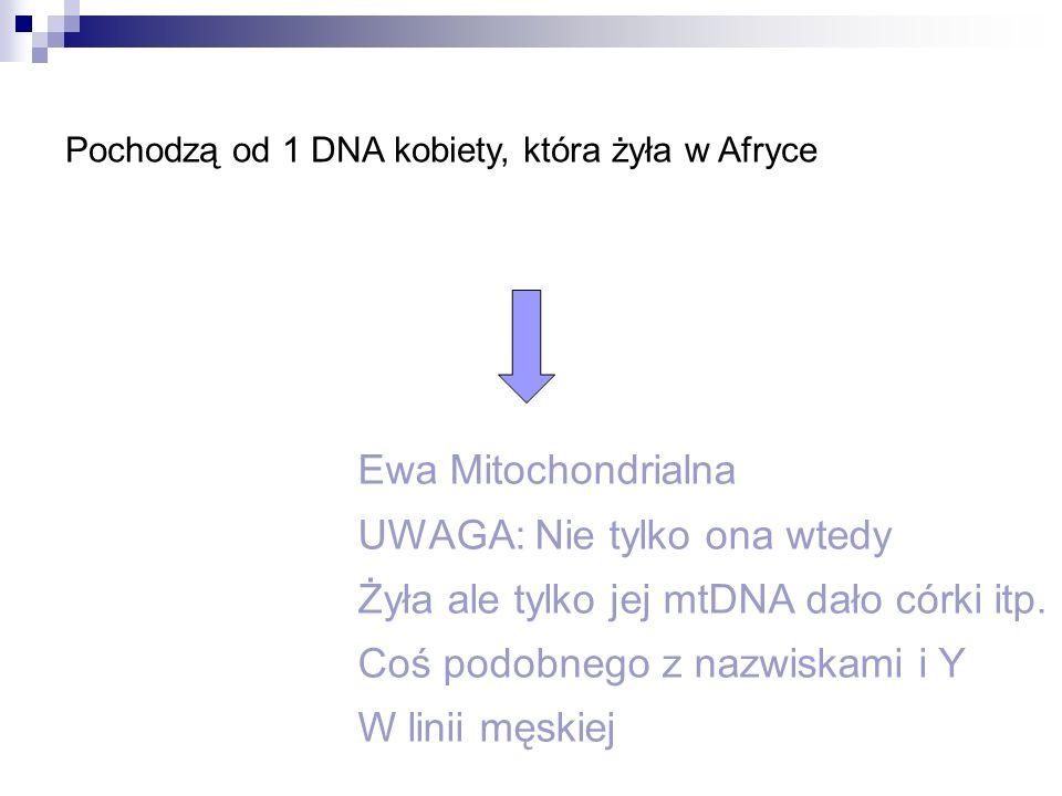 Pochodzą od 1 DNA kobiety, która żyła w Afryce Ewa Mitochondrialna UWAGA: Nie tylko ona wtedy Żyła ale tylko jej mtDNA dało córki itp. Coś podobnego z
