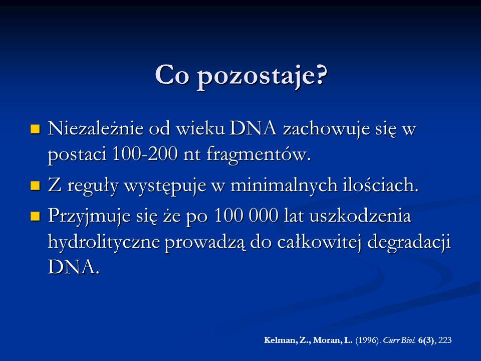 Co pozostaje? Niezależnie od wieku DNA zachowuje się w postaci 100-200 nt fragmentów. Niezależnie od wieku DNA zachowuje się w postaci 100-200 nt frag