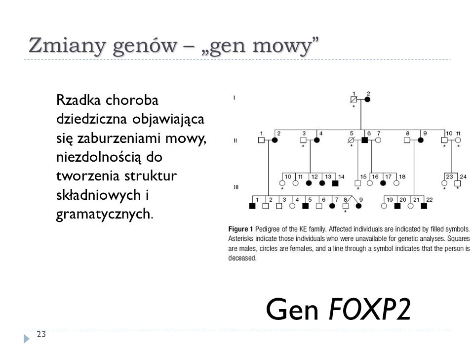 """Zmiany genów – """"gen mowy"""" Rzadka choroba dziedziczna objawiająca się zaburzeniami mowy, niezdolnością do tworzenia struktur składniowych i gramatyczny"""