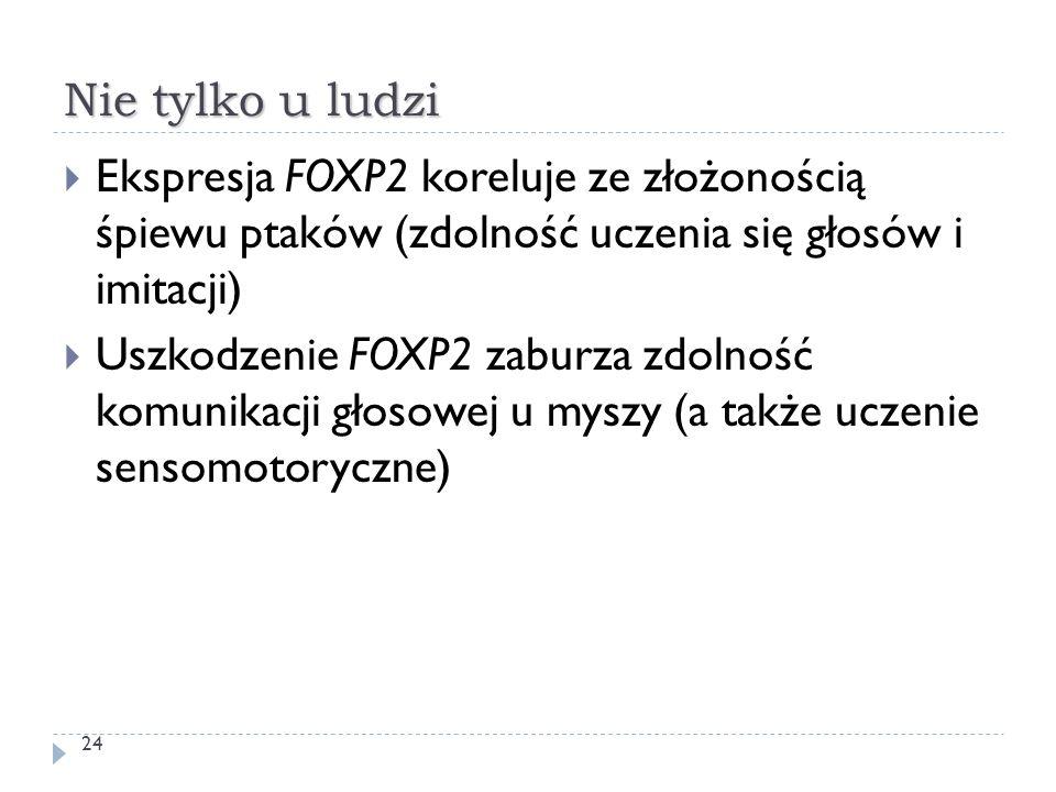 Nie tylko u ludzi  Ekspresja FOXP2 koreluje ze złożonością śpiewu ptaków (zdolność uczenia się głosów i imitacji)  Uszkodzenie FOXP2 zaburza zdolnoś