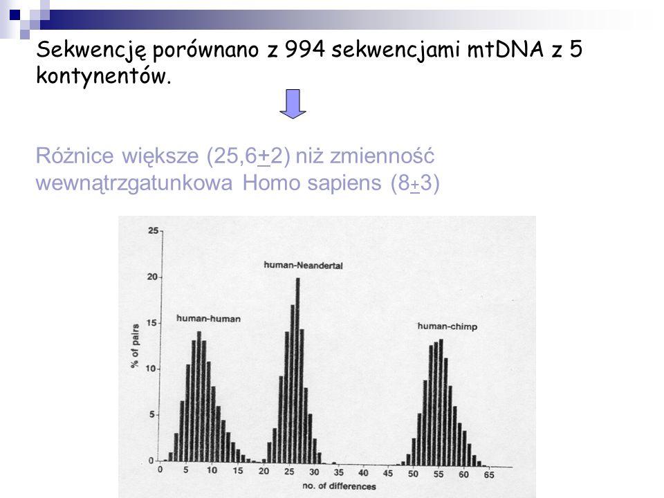 Sekwencję porównano z 994 sekwencjami mtDNA z 5 kontynentów. Różnice większe (25,6+2) niż zmienność wewnątrzgatunkowa Homo sapiens (8 + 3)