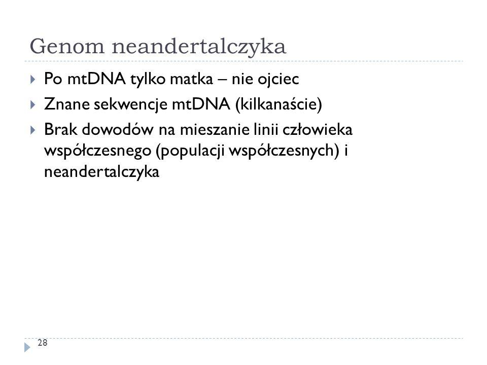 Genom neandertalczyka 28  Po mtDNA tylko matka – nie ojciec  Znane sekwencje mtDNA (kilkanaście)  Brak dowodów na mieszanie linii człowieka współcz