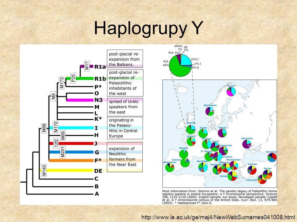 Chromosomalny Adam Badania polimorfizmów na chromosomie Y pozwalają na wnioskowanie, że najdawniejszy wspólny przodek w linii męskiej żył 46 – 91 tysięcy lat temu granicę te ustalono przy założeniu, że nie ma presji selekcyjnej na MSY (male- specific region of Y); w świetle ostatnich badań to założenie wydaje się błędne