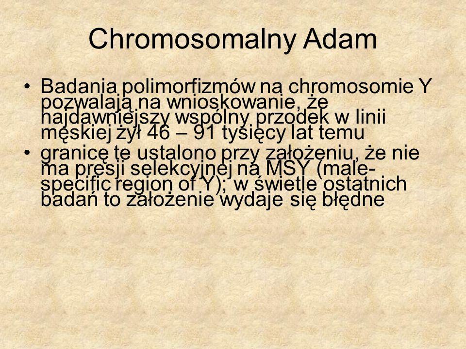 Chromosomalny Adam Badania polimorfizmów na chromosomie Y pozwalają na wnioskowanie, że najdawniejszy wspólny przodek w linii męskiej żył 46 – 91 tysi